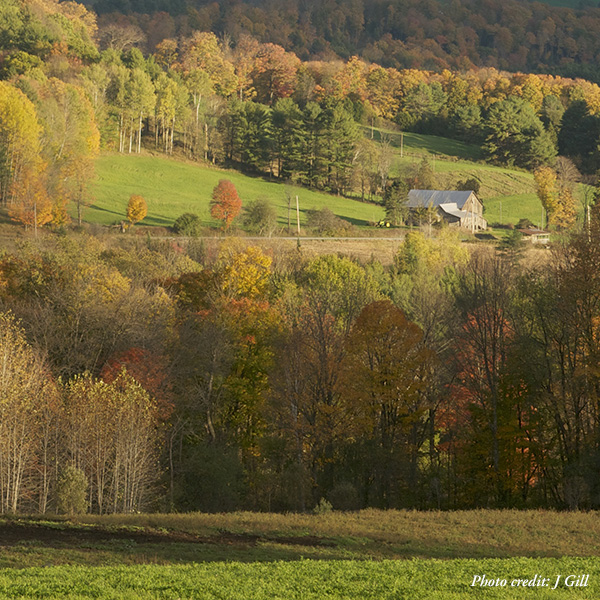 Fall Foliage Day in Pacham, Vermont